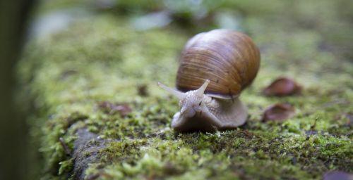 snail shell slug