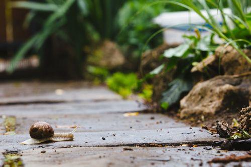 snail garden path