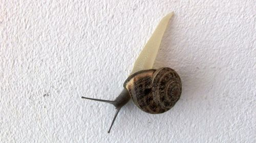 snail wall visitor