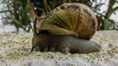 snail garden nature