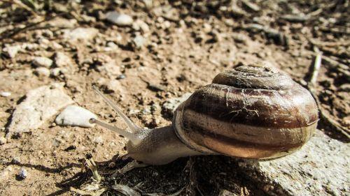 snail animal crawling