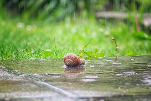 snail rain shell