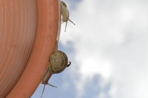 snail close up insects