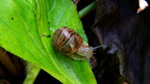 snail animal molluscs