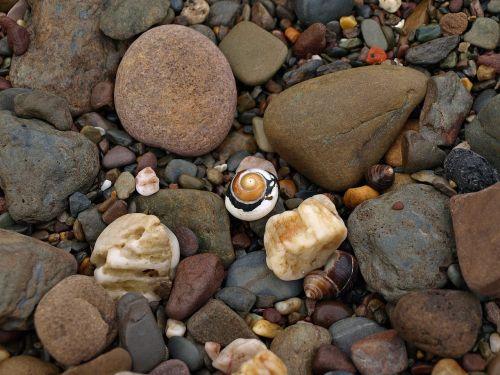 snail shell spiral