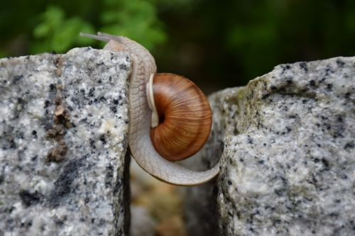 snail obstacle overcoming will