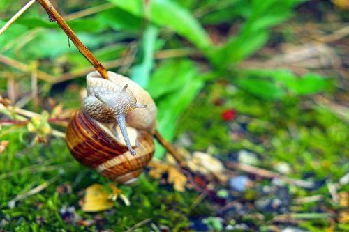 snail mollusk branch