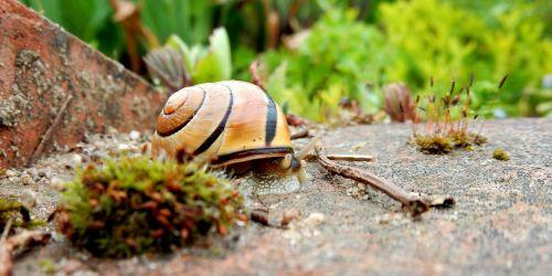 snail housing nature