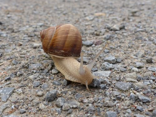 snail mollusk reptile