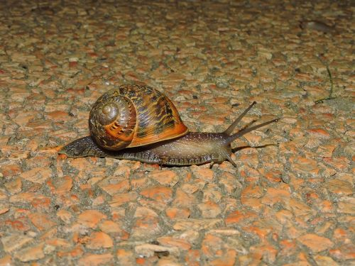 snail crawl animal