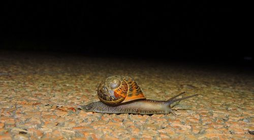 snail crawl night