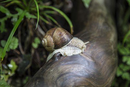 snail macro nature