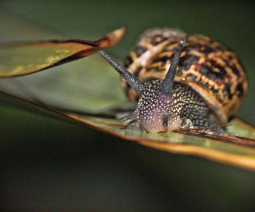 snail macro garden