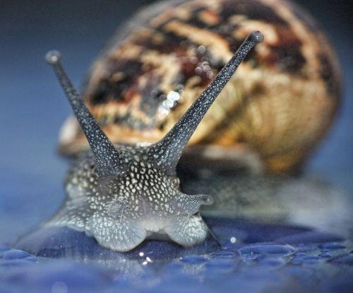 snail macro curious