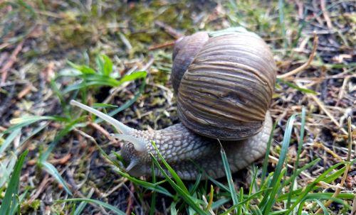 snail shell rain