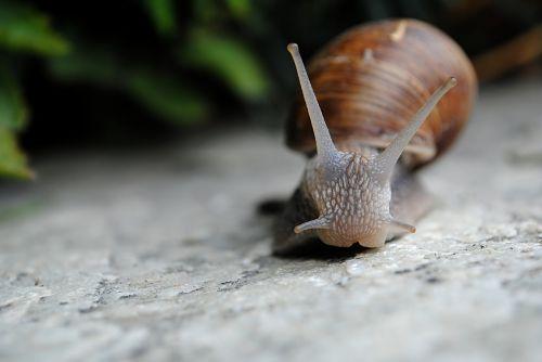 snail nature slow