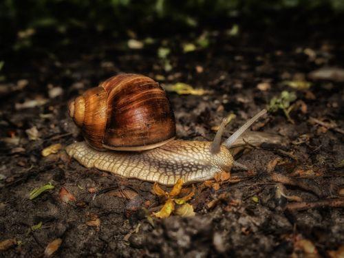 snail nature mollusk