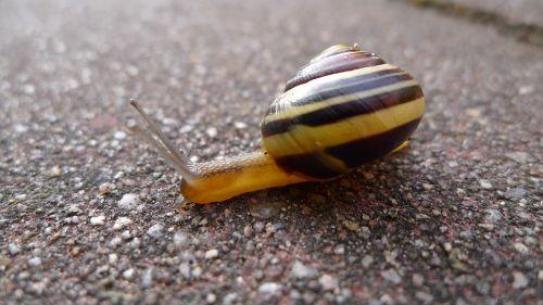 snail away crawl