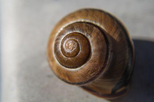 snail spiral housing