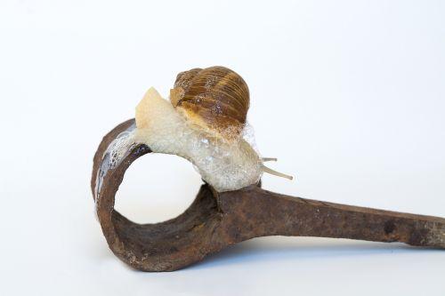 snail shell iron