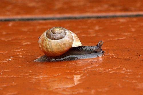 snail copse snail shell