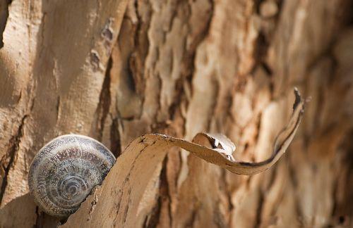 snail bark tree