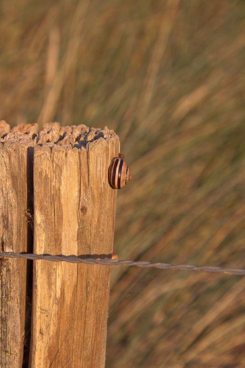 snail pile grass