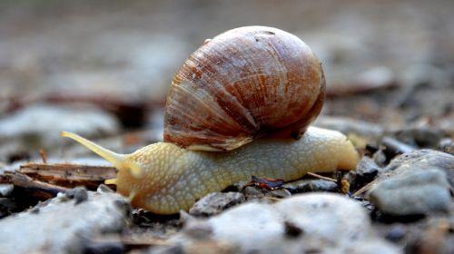 snail animal mollusk