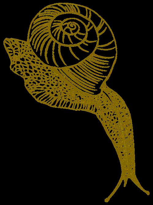 snail conch shell moist