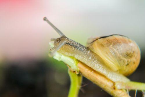 snail seashell molluscs