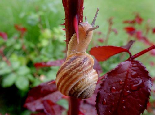 snail garden rosewood