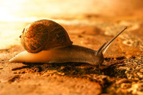 snail animal nature
