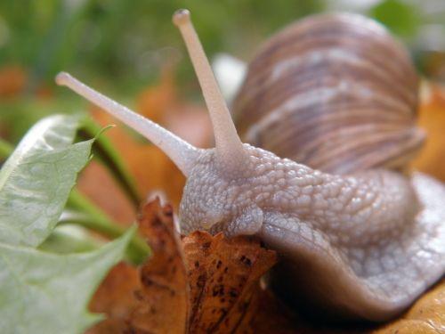 snail shell land snail