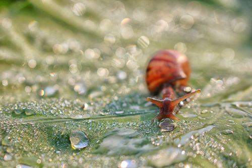 snail dew drops leaf
