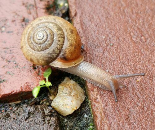 snail shell helix