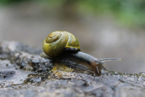 snail rain tiny