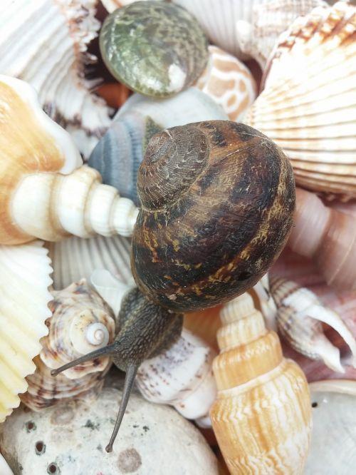 snail animal shells