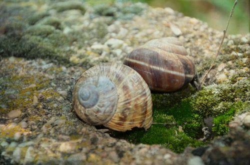 snail stone shell