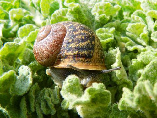 snail gastropod leaves