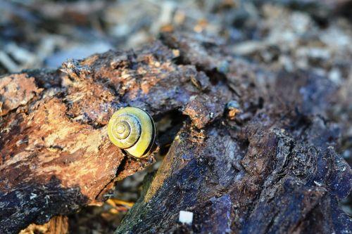snail seashell the bark