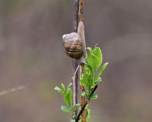 snail molluscum scallop