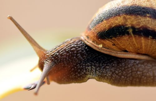snail shell close
