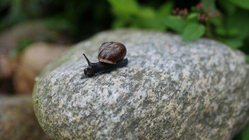 snail pest garden pest