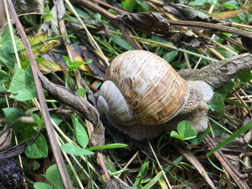 snail ravlyk slug