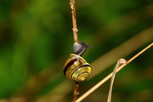 snail blade of grass green