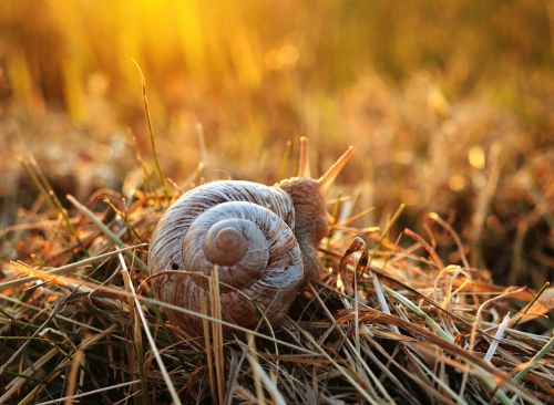 snail sunset grass