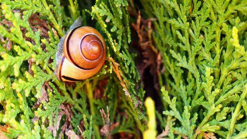 snail,nature,crawl,seashell,winniczek,green,garden