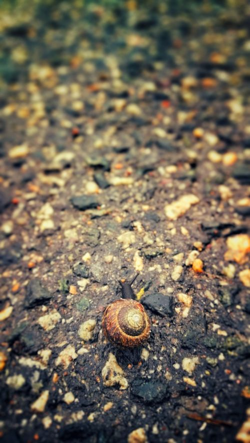 snail rain the land