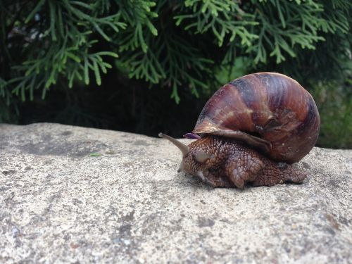snail creeps slimy