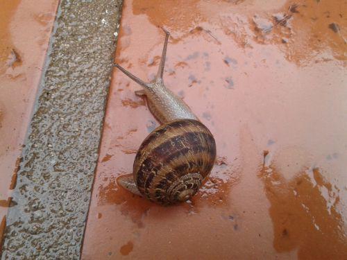 snail shell garden